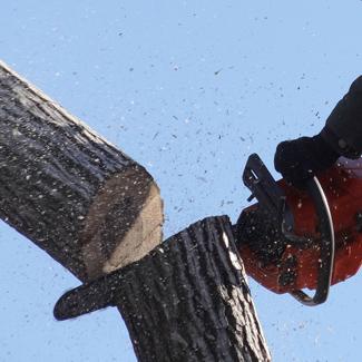 przycinanie-drzew