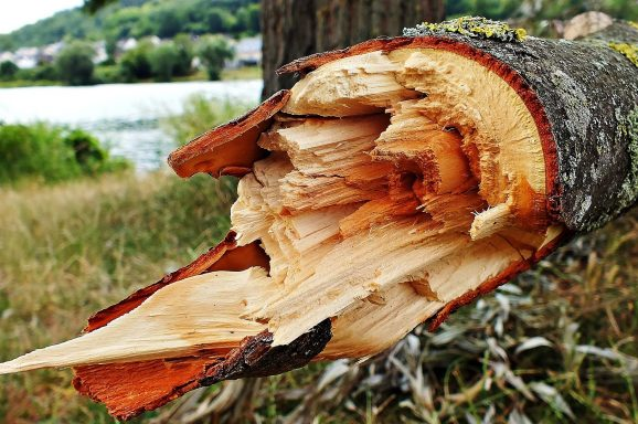 Wycinka nadłamanych drzew w pracy alpinisty przemysłowego