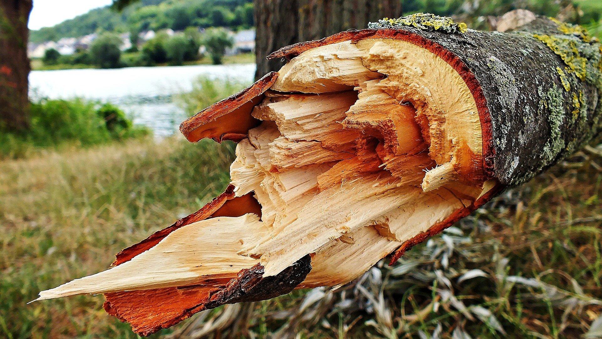 złamane drzewo